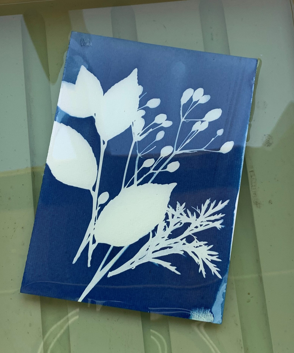 Sunday Wellbeing Workshop: Lanyon's Gardens + Sunlight = Cyanotype Photograph In collaboration with PhotoAccess Canberra