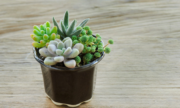 Harvest Day Out: Family Workshop: My Mini Succulent Garden