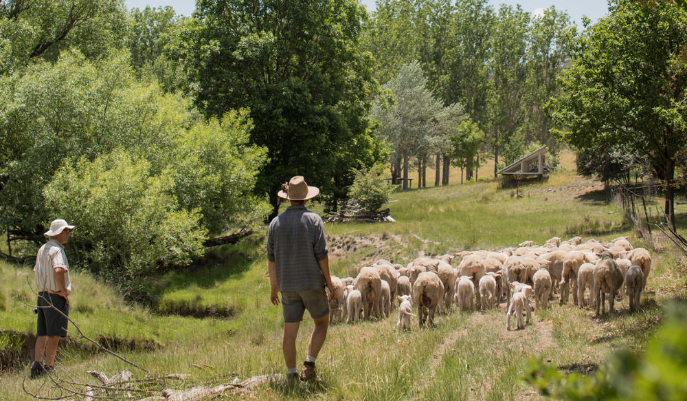 Harvest Day Out: Talk: Permaculture at Millpost Farm
