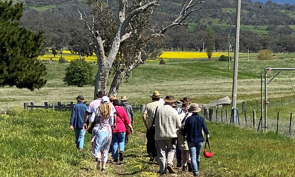 Harvest Day Out: Walk: Canoe Tree and local Ngunawal stories